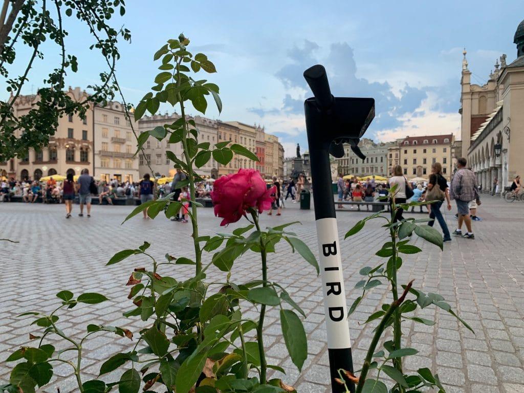 E-hulajnogi Bird wracają do Krakowa - zdjęcie e-hulajnogi