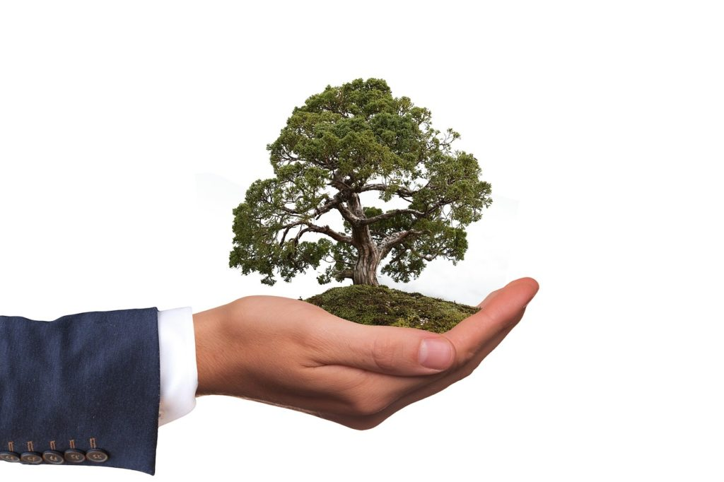 Climate Leadership - biznes na rzecz zmiany klimatycznej - drzewo zasadzone na męskiej dłoni.