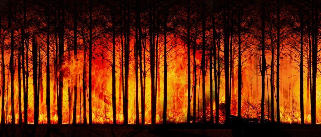 Zmiany klimatyczne - największe wyzwanie współczesnego świata- pożar lasu